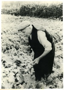 Gramp in his allotment